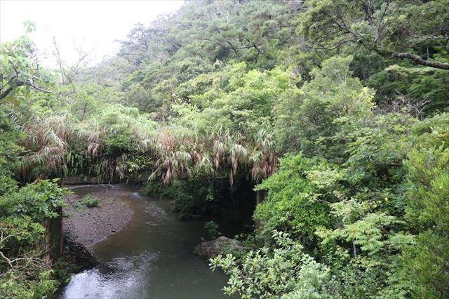 ▲沖縄県東村高江のヤンバルの森